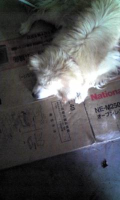 外犬のるいちゃん_e0114246_22554025.jpg