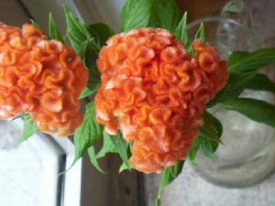 FLOWERS  ~コサージュ!_b0129548_2321265.jpg