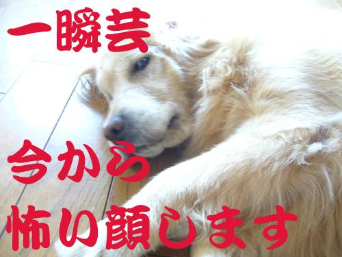 c0085188_209773.jpg