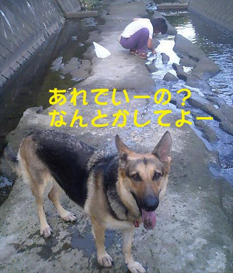 e0060693_16215516.jpg