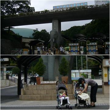 多摩動物公園へ_c0051105_6502343.jpg