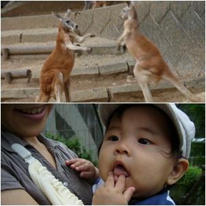 多摩動物公園へ_c0051105_71074.jpg