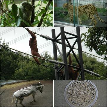 多摩動物公園へ_c0051105_7191338.jpg