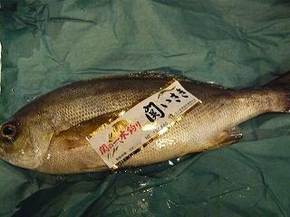 地魚_f0157910_1324114.jpg