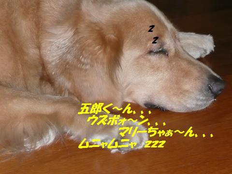f0114128_10302745.jpg
