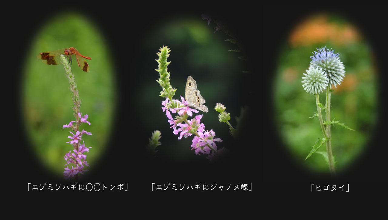 c0132230_6543114.jpg