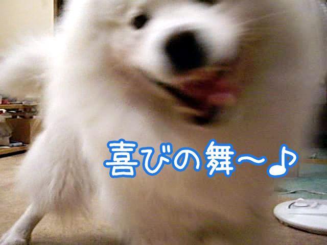 ♪『もけもけ姫』_c0062832_1533641.jpg