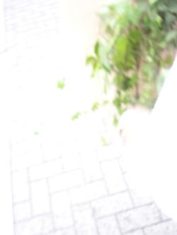 b0141446_16272173.jpg