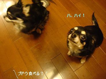 あみちゃん_d0006467_2357811.jpg