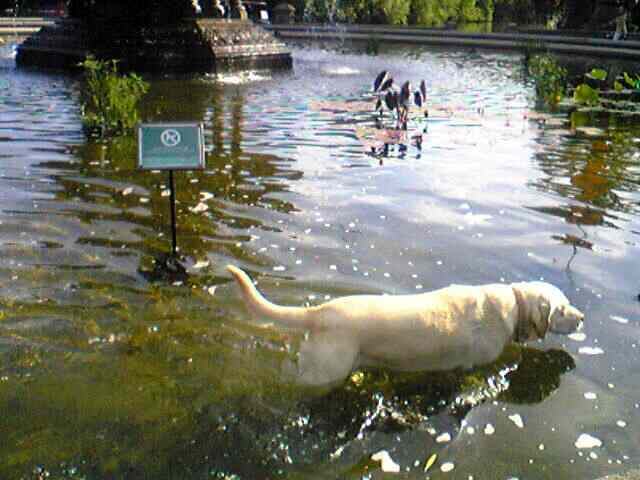 2008 New York Summer Report 2 ~Dogs in Central Park~_e0142585_1452229.jpg
