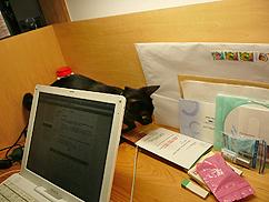 ネコが飛び回る事務所_b0014003_13542317.jpg