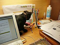 ネコが飛び回る事務所_b0014003_1354422.jpg