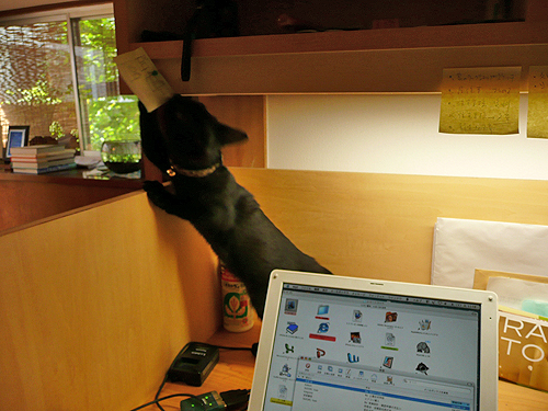 ネコが飛び回る事務所_b0014003_13545978.jpg