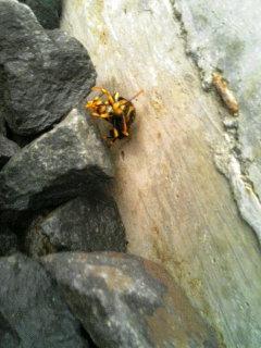 蜂の巣_b0118418_22133584.jpg