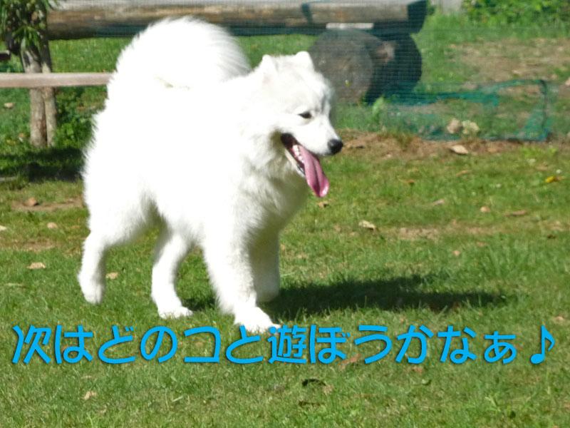 b0146024_15125047.jpg