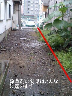 ゴミ処理と諸々_f0031037_19214160.jpg