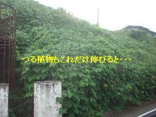 ゴミ処理と諸々_f0031037_19301431.jpg