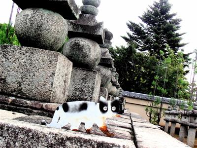vol.418. 京都紫野・大徳寺〜「上様」の墓所に「猫」を見た_b0081338_3384953.jpg