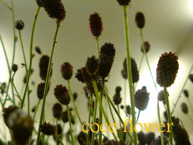 季節を感じる♪_c0130553_19392456.jpg