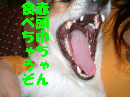 c0164353_11203069.jpg