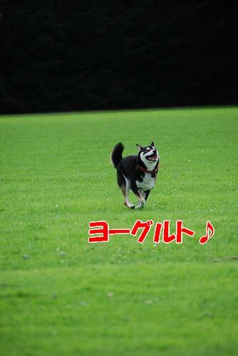 e0145753_1849377.jpg