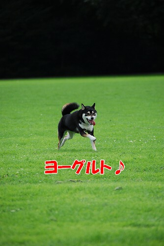 e0145753_1850123.jpg