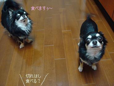 メープル・シフォンケーキ_d0006467_2212327.jpg