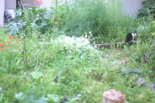 今日のロロ... 猫のいる風景_f0032814_2016684.jpg