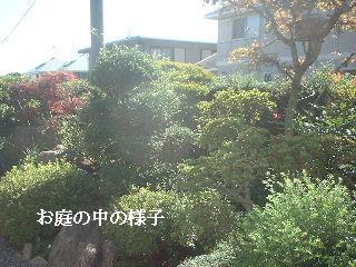 f0031037_1614402.jpg