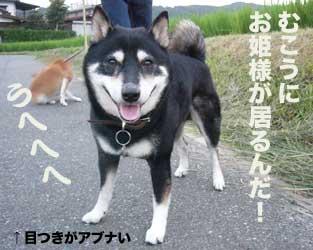 b0057675_105104.jpg