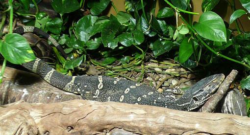 ケルン動物園(水族館)のカエル_e0054299_9483778.jpg