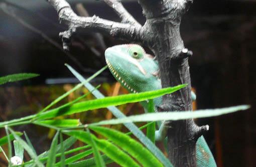 ケルン動物園(水族館)のカエル_e0054299_9484758.jpg