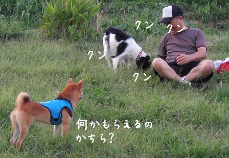 犬おじさん_f0068501_15165497.jpg