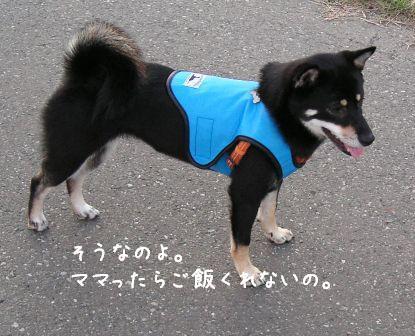 犬おじさん_f0068501_1528595.jpg