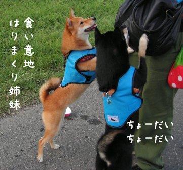 犬おじさん_f0068501_15311546.jpg