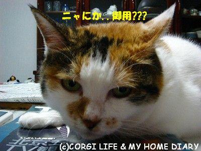 c0153410_10451398.jpg