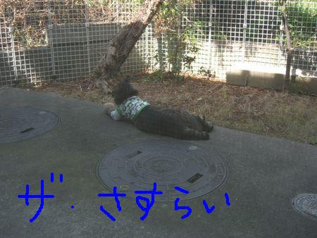 a0099131_15495925.jpg