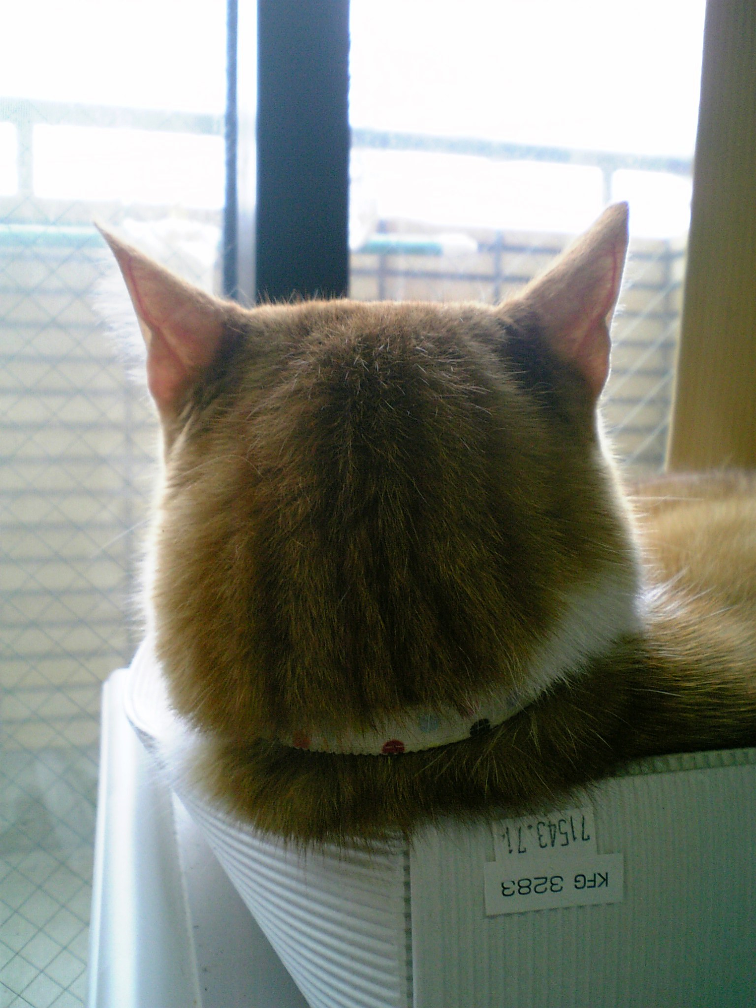 猫語講座4_b0019333_0563635.jpg