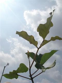 ジャックと豆の木のその後のその後_f0160063_1626588.jpg