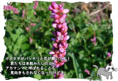 f0137096_12591691.jpg