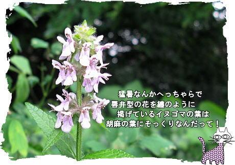 f0137096_1343119.jpg