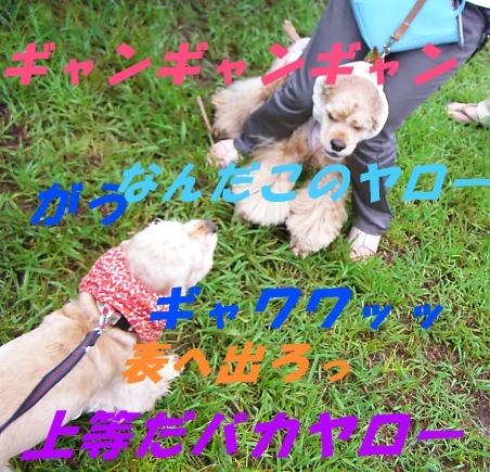 b0067012_292892.jpg
