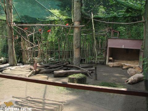 08年08月15日こども動物自然公園、真昼_f0138828_1827173.jpg