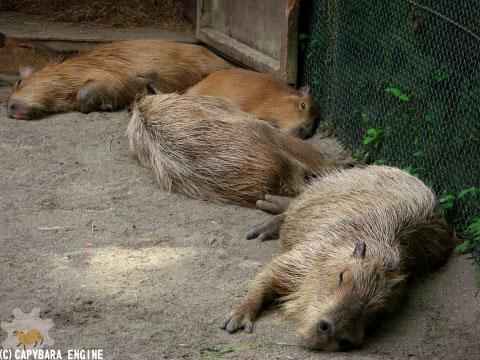 08年08月15日こども動物自然公園、真昼_f0138828_1831971.jpg