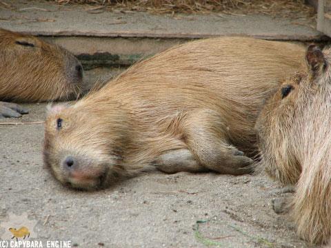 08年08月15日こども動物自然公園、真昼_f0138828_18424620.jpg