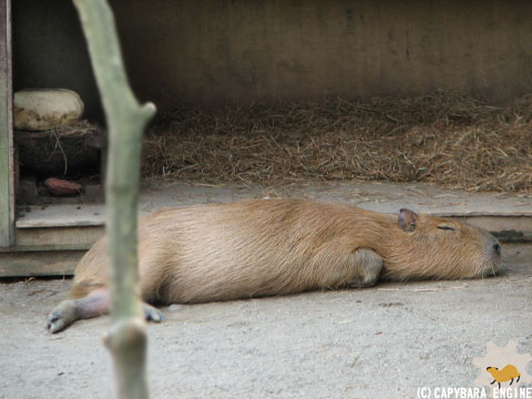 08年08月15日こども動物自然公園、真昼_f0138828_18425286.jpg