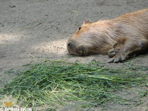 08年08月15日こども動物自然公園、真昼_f0138828_1843066.jpg