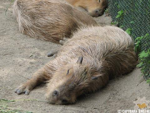 08年08月15日こども動物自然公園、真昼_f0138828_18434994.jpg