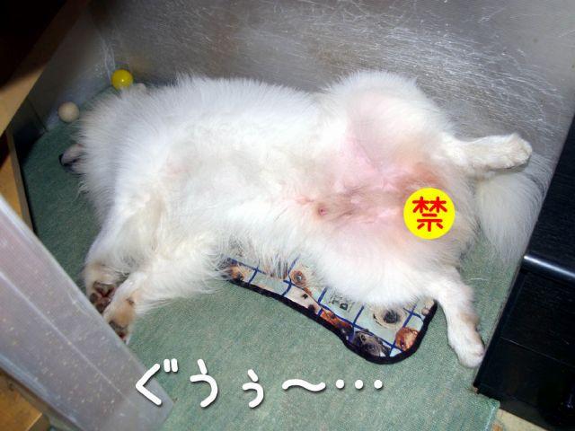 モクモク黒岡助手_c0062832_18442961.jpg
