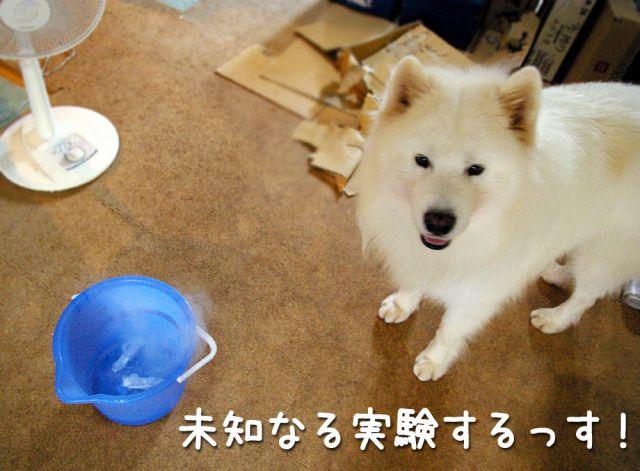 モクモク黒岡助手_c0062832_1846961.jpg